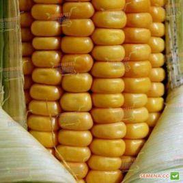 Амарок F1 семена кукурузы кормовой ранней (Мнагор)
