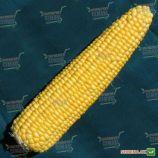 Анита F1 семена кукурузы сладкой (Semo)