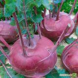 Бланкит семена капусты кольраби (Semo)