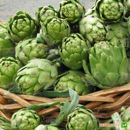 Зеленый глобус семена артишока (Hem Zaden)