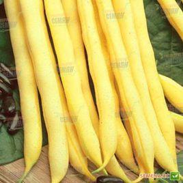 Пэнсил Под семена фасоль спаржевой кустовой средней 60-65дн желт. (Anseme)