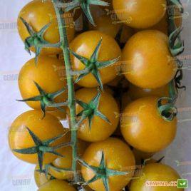 Голдкроне семена томата индет. черри раннего 90-100 дн. окр. 15-20 гр. желт. (Moravoseed)