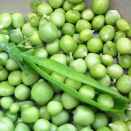 Бобслей семена гороха раннего 60-65 дн (Гавриш)