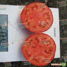 Акела F1 семена томата дет. раннего 60-65 дн. окр.-прип. 200-250 гр. (Clause)