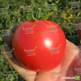 Акела F1 семена томата дет. раннего 85-95 дн. окр.-прип. 200-250 гр. (Clause)