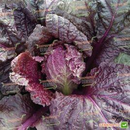 KS 888 F1 семена капусты пекинской (Kitano Seeds)