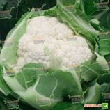 Ардент F1 семена капусты цветной 75-80 дн. (Clause)
