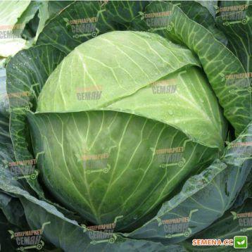 Бригадир F1 семена капусты б/к среднепоздней 110-120 дней 3,5-5 кг (Clause)