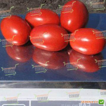Дино F1 семена томата дет. раннего 95-105 дн. слив. 130-150г красный (Clause)