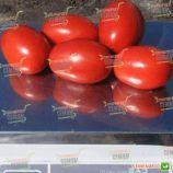Дино F1 семена томата дет. раннего 95-105 дн. слив. 130-150г (Clause)
