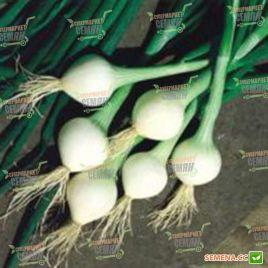 Элоди семена лука репчатого озимого 290дн. короткого дня белого (Clause) СНЯТО С ПРОИЗВОДСТВА