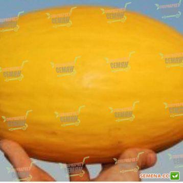 Форбан F1 семена дыни сортотип Желтая Канарская средней 80-85 дн. 2-2,5 кг овал. жел./бел. (Clause) НЕТ ТОВАРА