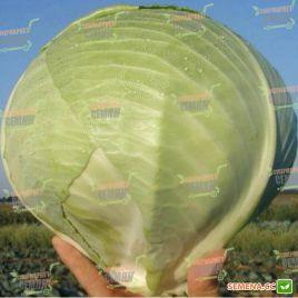 Гард F1 семена капусты б/к поздней 120-130 дн. 3 кг окр. (Clause)