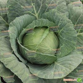 Годвари F1 семена капусты б/к ранней 58-60 дн 1,3-1,8 кг (Clause)