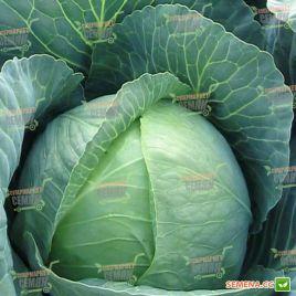 Капорал F1 семена капусты б/к средней (Clause)
