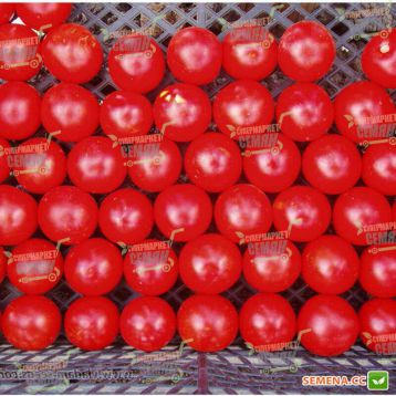 Хилма F1 семена томата черри (Clause)