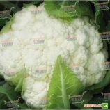 Клипер F1 семена капусты цветной ранней 60-65 дн. 1-1,2 кг (Clause)