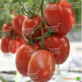 Коразон F1 семена томата индет. раннего 200-220 гр. (Clause)