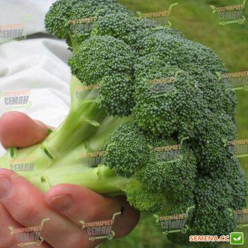 Корос F1 семена капусты брокколи (Clause)