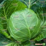 Легат F1 семена капусты б/к ультраранней 48-52 дн. 0,9-1 кг окр. (Clause)