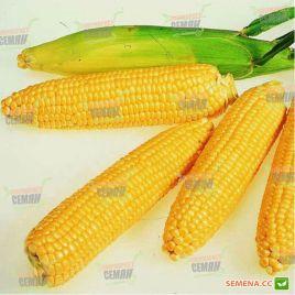 Леженд F1 семена кукурузы сахарной Se 70-72дн. 18см 16-18р. (Clause)