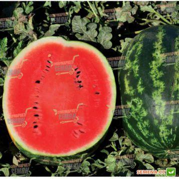 Ливия F1 семена арбуза тип кр.св. раннего 62-65 дн. 10-12 кг окр. (Clause)