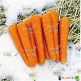 Майор F1 семена моркови Нантес (Clause)