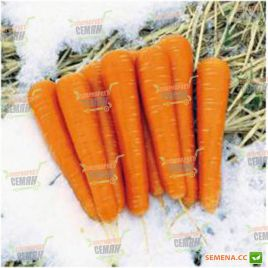 Майор F1 семена моркови Нантес поздней 140 дн. (Clause)