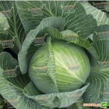 Марабу F1 семена капусты б/к поздней 140-145 дн 3-3,5 кг окр. (Clause)