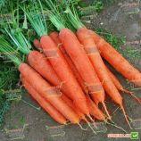 Матч F1 семена моркови Нантес (Clause)