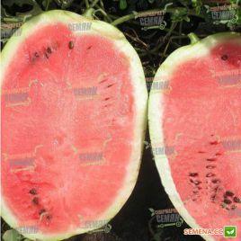 Мэдисон F1 семена арбуза тип Кримсон Свит (Clause)