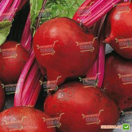 Нобол семена свеклы столовой ранней 90-95 дн 0,25-0,3 гр окр. (Clause)