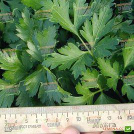 Новас семена петрушки листовой (Clause)