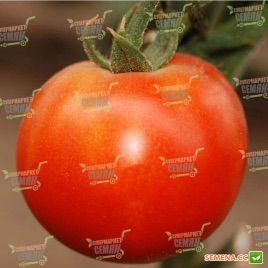Пьетро F1 семена томата индет. (Clause)