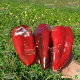 Редкан F1 семена перца сладкого (Clause)