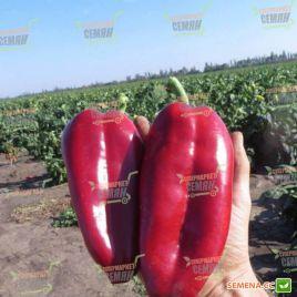 Редкан F1 семена перца сладкого тип Венгерский раннего 70-75 дн. конич. 140-160 гр. 16х7см зел./красн. (Clause)