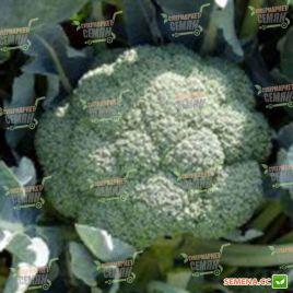 Румба F1 семена капусты брокколи среднеранней 75 дн 0,8-1 кг (Clause)
