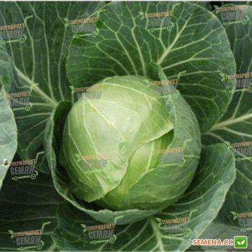Сир F1 семена капусты б/к ранней 60-65 дн 1,5-2 кг окр. (Clause)