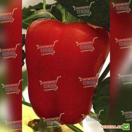 Соломон F1 (Пиктор F1) семена перца сладкого раннего 65-70 дн. (Clause)