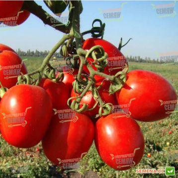 Тенорио F1 семена томата дет. (Clause)