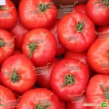 Афен F1 семена томата индет. розового (Tezier)