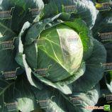 Гигант F1 семена капусты б/к поздней 110-120 дн. 3,5-4 кг окр-прип. (Tezier/Clause)