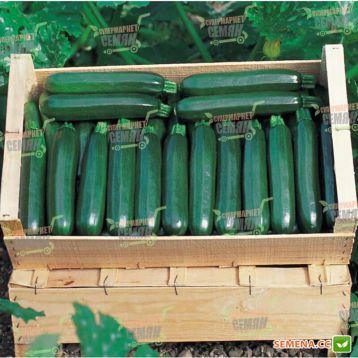 Кора F1 семена цуккини раннего 40-42 дн. темно-зеленого (Tezier/Clause)