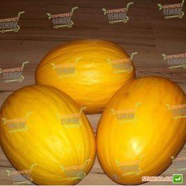 Агаси F1 семена дыни тип SPANISH ранней 70-75 дн. 1,5-3,5 кг окр. (Kitano Seeds)
