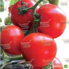 Ядвига F1 семена томата полудет. раннего 80-85 дн. окр. 200-220г (Kitano Seeds)