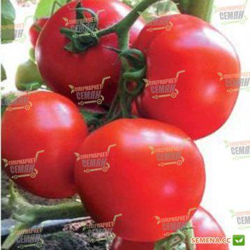 Ядвига F1 семена томата полудет. (Kitano Seeds)