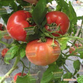 Касамори F1 семена томата индет. раннего 95-105 дн. окр.-прип. 300-550г роз. (Kitano Seeds)