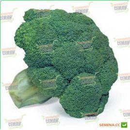 Кеззи F1 семена капусты брокколи средней 1-1,5кг (Kitano Seeds)
