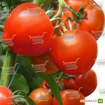 Хитомакс F1 семена томата индет. (Kitano Seeds)