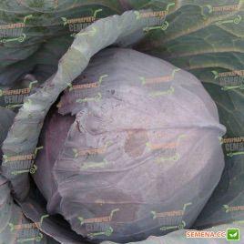 Киото F1 семена капусты к/к ранней 70-75 дн. 1,5-2,5 кг (Kitano Seeds)